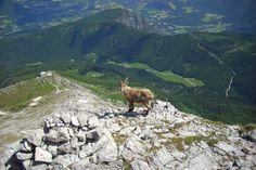 Richtiges Verhalten mit Hund im Nationalpark Berchtesgaden - Berchtesgadener Land Blog