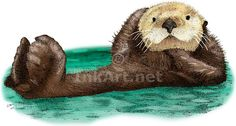 Full color illustration of a Sea Otter (Enhydra lutris)