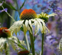 Summer flower macro - Macro of flower in summer
