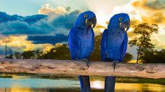 Pantanal en Brasil: por qué es el ecosistema natural más increíble