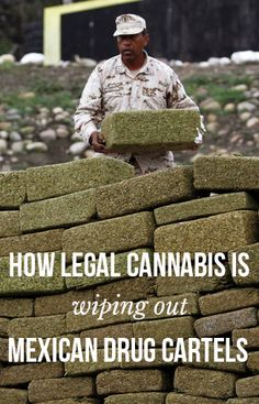 How legal cannabis is wiping out Mexican drug cartels | massroots.com