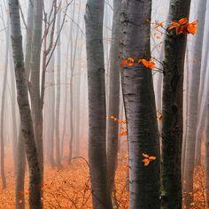 ✮ Orange Wood
