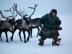 Nomadic Nenets reindeer herder in the tundra 100km north of Yar-Sale, Yamal Peninsula, Arctic Siberia