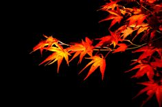 """(#Maple leaves by Takeya Oikawa, on 500px) suzanne caygill color the essence of you explains the shapes that correspond to the autumn type = """"Swiftness of line should characterize styling for Autumn personalities. Points, as in the contours of a maple leaf, a palm frond, the flower of an exotic bird of paradise, an arrow, a quill, symbolize the type of dramatic thrust."""" So lines of autumn type are pointed, creating dynamism, action, force; swift meaning the opposite of relaxing lines."""