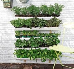 1000 images about huerto de balcon on pinterest mini for 1000 ideas para el jardin
