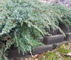 Hekkplanter for enhver smak, her er mine forslag. Plants, Plant, Planets