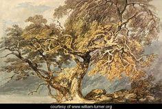 A Great Tree, c.1796 - Joseph Mallord William Turner - www.william-turner.org