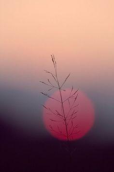 minimaliste nature