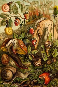 Snails, Gastropods, Mollusks