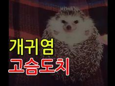 [티비플] 죠리퐁 간식에 이성놔버린 고슴도치 (개귀염주의)