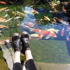 Image de fish, shoes, and grunge The Garden Of Words, A Silent Voice, Art Hoe, Gorillaz, Favim, Photos, Pictures, Sock Shoes, Artsy