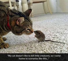 My cat doesn't like to kill little creatures.