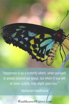 """""""Happiness is as a butterfly which, when pursued, is always beyong our grasp, but which if you will sit down quietly, may alight upon you.""""   Nathaniel Hawthorne"""