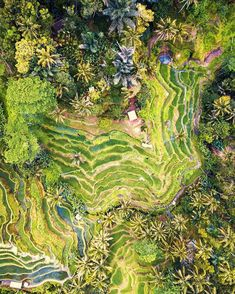 "Bali, Indonesia. ""The views of these Balinese rice terraces are magnificent from dawn to dusk, and there are so many different shades of green and angles from which to snap a picture."""