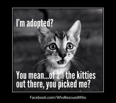 Image result for I am a rescued cat