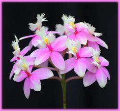 Orkidé Photo orchid-4.jpg | Bestgraph
