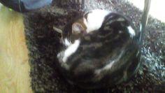 Sleppy head cat