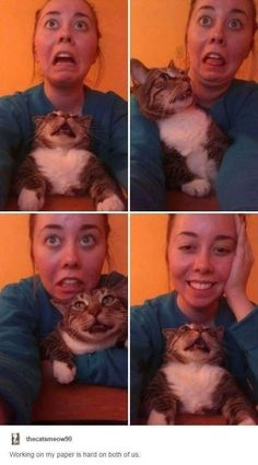 Study time: | 27 Cat Pictures That Are Never Not Funny