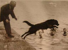 Swansea Jack (1930 - October 1937)  was a famous dog who rescued 27  people from the docks and  riverbanks of Swansea, Wales
