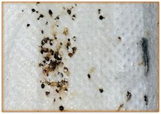 Today we want to share with you the best bed bug poop pictures. Bed Bugs, Black Spot, Cool Beds, Cool Pictures, Modern Beds
