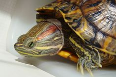 Turtle - bygdb by gianni del bufalo