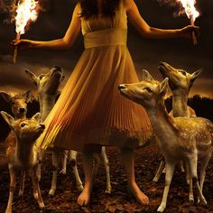 photo-eye | BLOG: Portfolio: Tom Chambers' Animal Visions