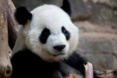 The cubs  big brother XI LAN 5th birthday! 8/30/13