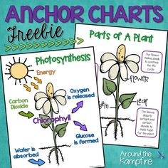 Free photosynthesis and parts of a plant anchor charts for a plant life cycle bulletin board. Science Experiments Kids, Science For Kids, Science Ideas, Science Penguin, Science Fun, Physical Science, Science Lessons, Earth Science, Science Activities