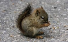 I've Never Seen A Baby Squirrel. I Am Not Disappointed