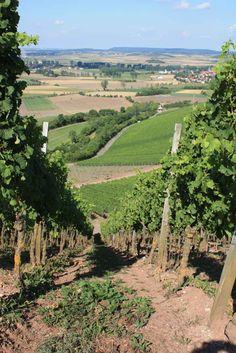 In den Weinbergen bei Ipsheim in Franken  ... #Weinwandern #Winter #Wein #Franken #Ipsheim