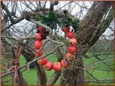 æblekrans