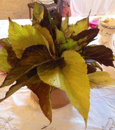 Bouquet de feuilles ramassé dans le jardin!