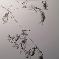 Julie Dam, flower-drawing