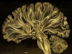 Scientific Art of Colorful Brain Scans Has Over 1,000 Gold Leaf Pieces