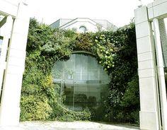 Descubre cómo se beneficia el medio ambiente con los Muros Verdes