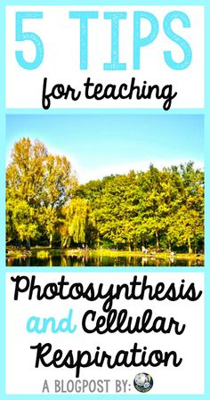 As teachers, we are always looking for tips to improve our practice in our classrooms. For high school science teachers, it can be hard to take the time to pause and be reflective on what we are doing and what we could improve. So here are 5 ideas for secondary biology teachers to use when teaching photosynthesis and cellular respiration (energy flow as I like to call it!) in their classrooms.