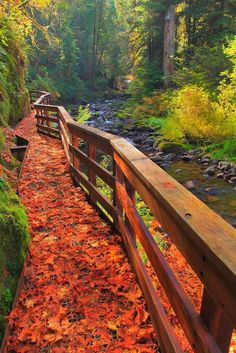 Autumn Leaves in all their glory - awesome! via Sweet Creek Trail Scafold, Oregon | PicsVisit)