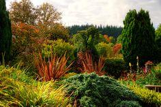 grasses, phormium and evergreens - Photos by Ieuan Evans via landscape focussed