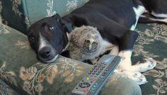 Un perro y un búho
