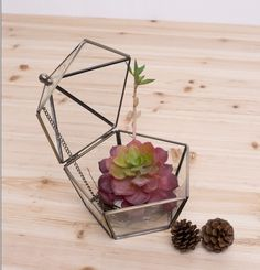 House Shape Gift Decor Terrarium Lantern Containers with 3m String Light Set