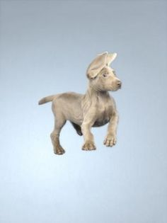 William Wegman, falling puppies  I can ... I can .... I can fly....