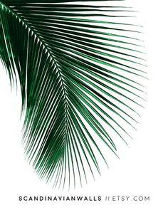Foglia di Palma palm stampa stampa di foglia di Palma di ScandinavianWalls | Etsy