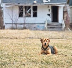 Detroit Dog Rescue - the city is overrun with strays because owners release their animals onto the streets when they no longer can afford caring for them. National news reports estimate there are 50,000 stray dogs in Detroit.