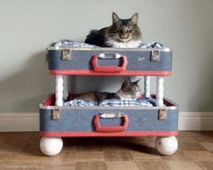 cama litera para gatos con maleta