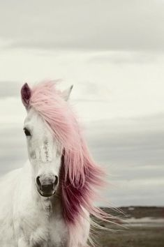 This horse's mane is pure awesomeness