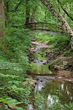 The Botanical Gardens at Asheville, NC ... an independent non-profit garden, with the mission of promoting and preserving native plant species and habitats of the Southern Appalachian Mountains ... located on land adjacent to the UNCA campus north of downtown Asheville.