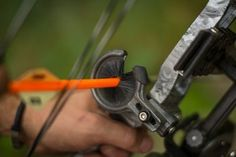 bowhunting myths whisker biscuit