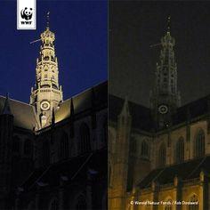 De St. Bavo voor en tijdens Earth Hour 2014 - Haarlem, The Netherlands