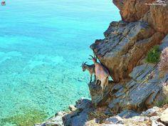 Cretan landscape..... Lucky goats!