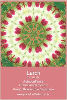 Mandala Florais de Bach - Essência Larch